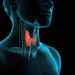 Alimentación saludable para la tiroides